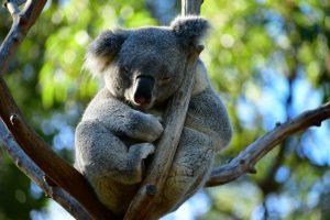 onvergetelijk Australie